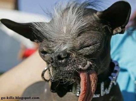 anjing-terjelek-di-dunia