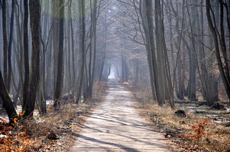 Ostsee - Erinnerungen und Vorfreude | Wald