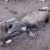 Corpo é encontrado em avançado estado de decomposição na zona rural de Crisópolis