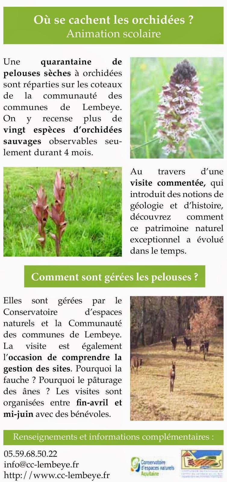 Moulin et gites lespielle 64350 5kms de lembeye - Doit on couper les tiges des orchidees ...