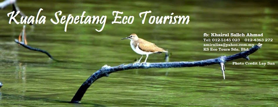 KUALA SEPETANG ECO TOURISM Matang Mangrove Forest Reserve Tour, Bird Watch, Fireflies Sighting