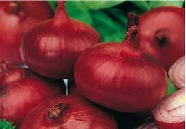Remedios caseros para el colon irritable mi experiencia share the knownledge - Hemorroides alimentos prohibidos ...