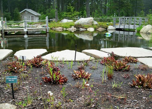Fish girl writes june 2013 for Koi pond overflow