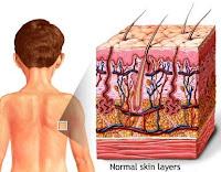 Histology of skin