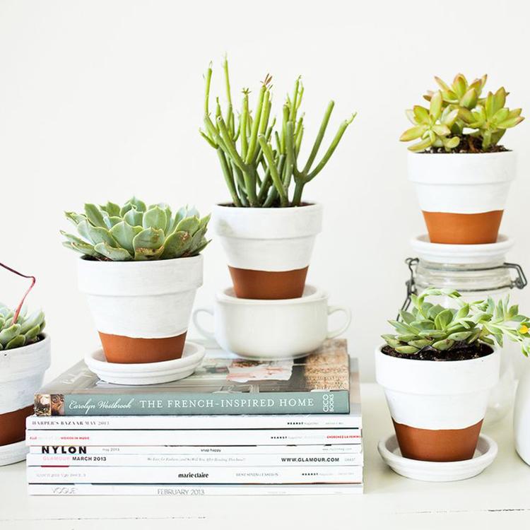 Decorar con cactus y plantas suculentas alquimia deco - Macetas minimalistas ...
