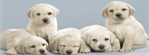 Find Puppy Pictures Gallery