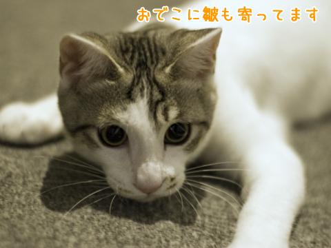 瞳孔が開いている子猫