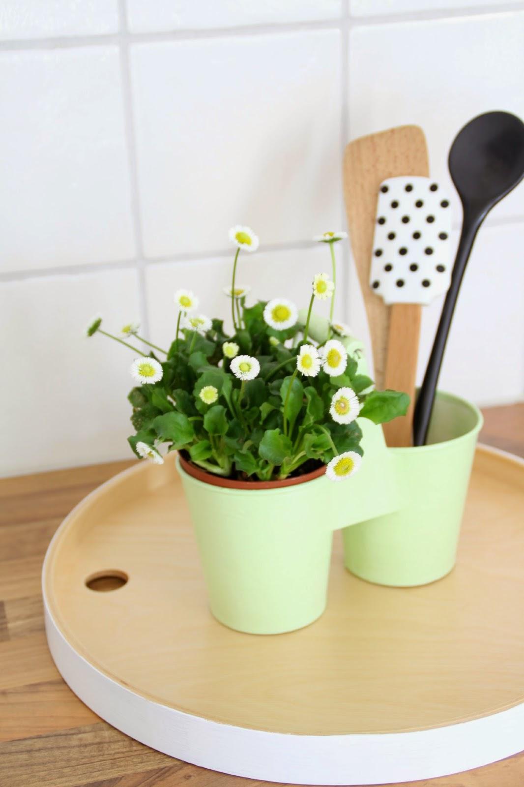grüner Übertopf mit Gänseblümchen auf Tablett mit Küchenutensilien im Hintergrund