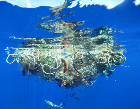 pacific ocean underwater animals  ... debris collect and entangle