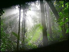 deforestation in malaysia case study gcse