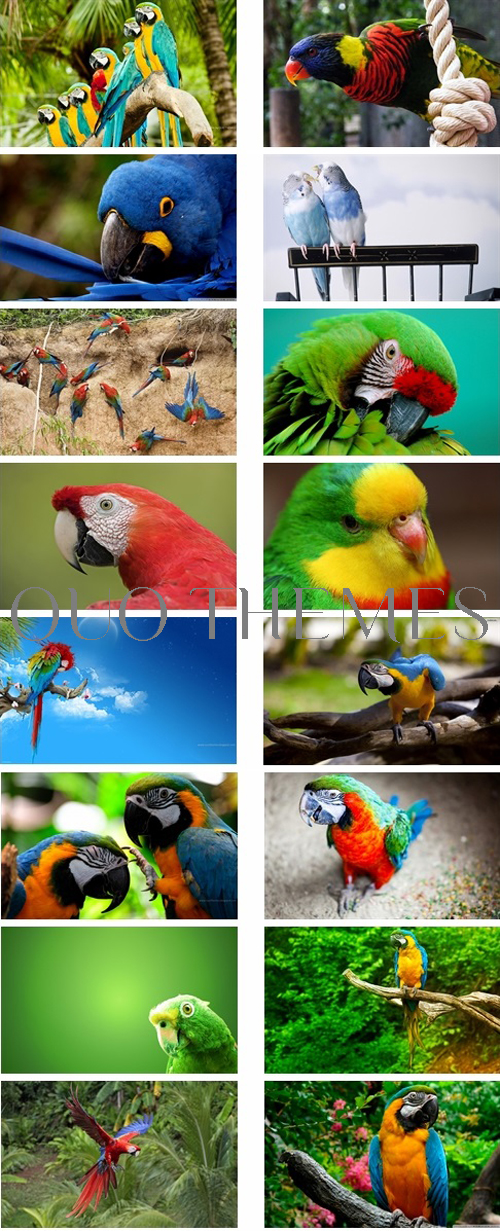 Parrots Theme For Windows 7 And 8