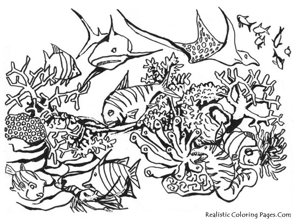 ocean animals plants coloring pages - photo#24