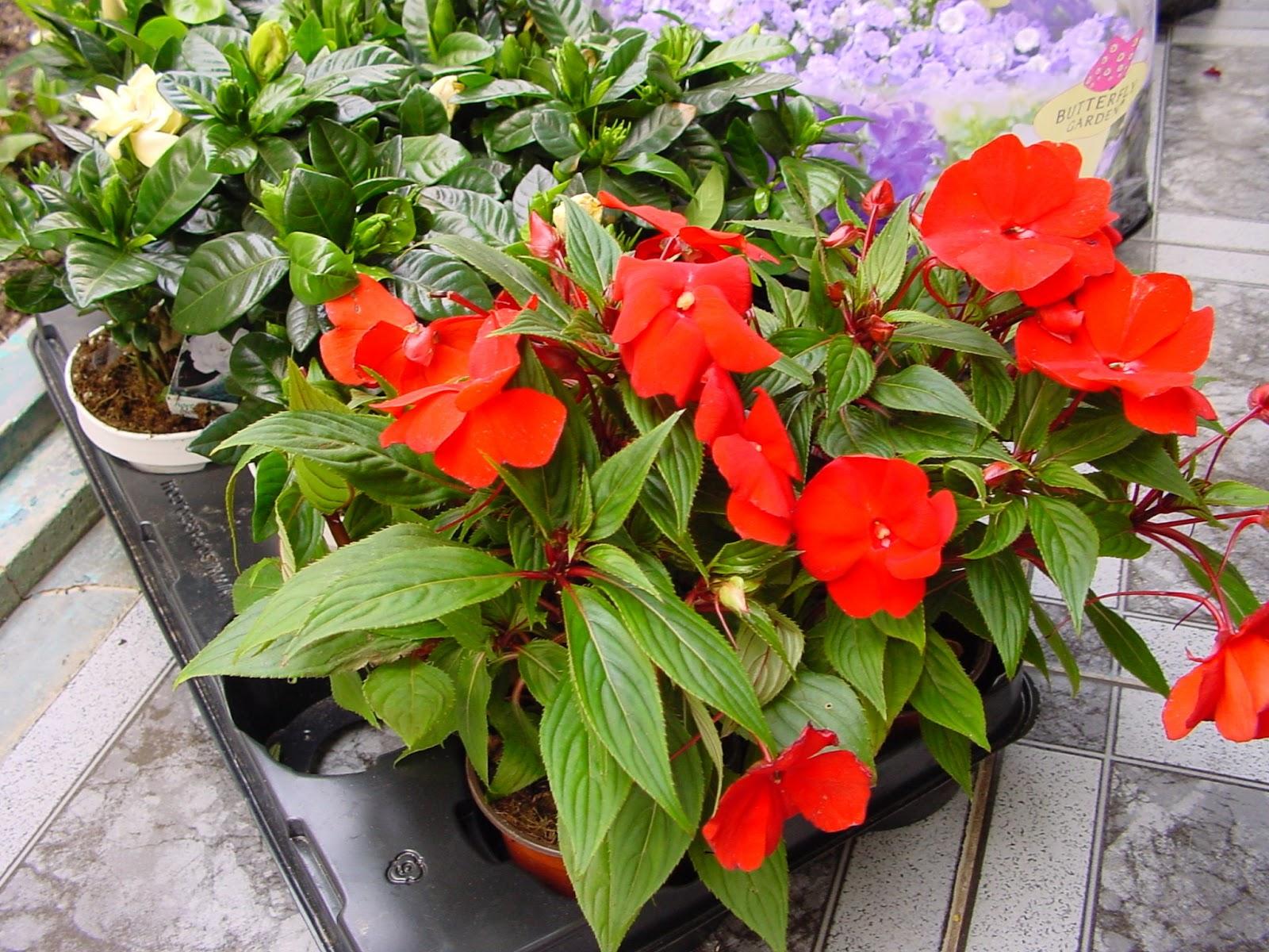Son plantas de pequeño tamaño, con pocas flores, contenidas en