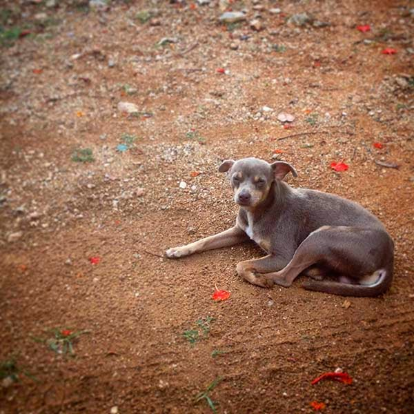 Nuestro amigo el perrito Pakal en la entrada del restaurante Chac Mool en Santa Elena, Yucatán