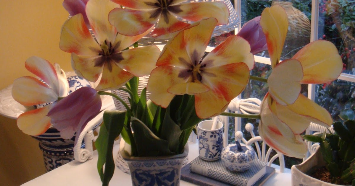 Rose Colored Glasses: Tulips Again