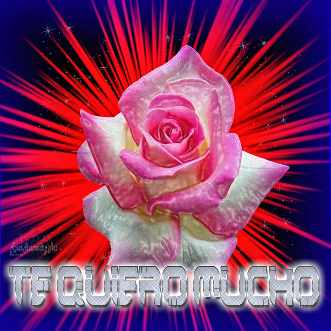 Imagenes De Rosas Rosadas Hermosas - Ramo de rosas rosadas hermosas Dreamstime