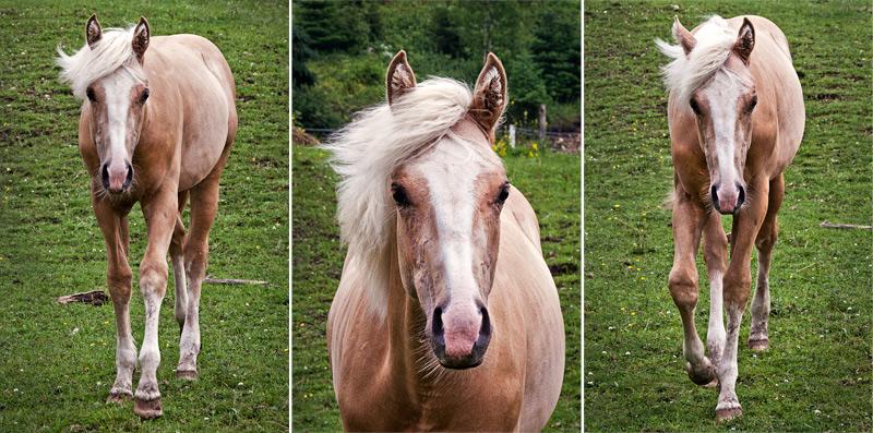 White horse with black mane