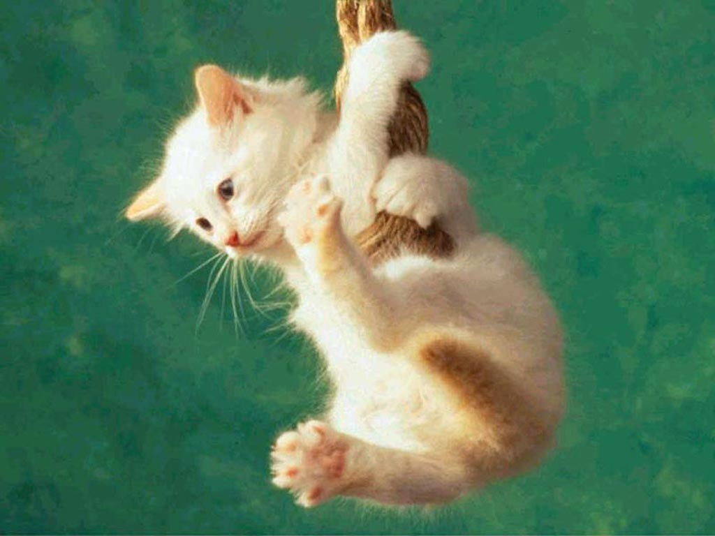 Cute Hang In There Cat Wallpaper Background 1024 X 768
