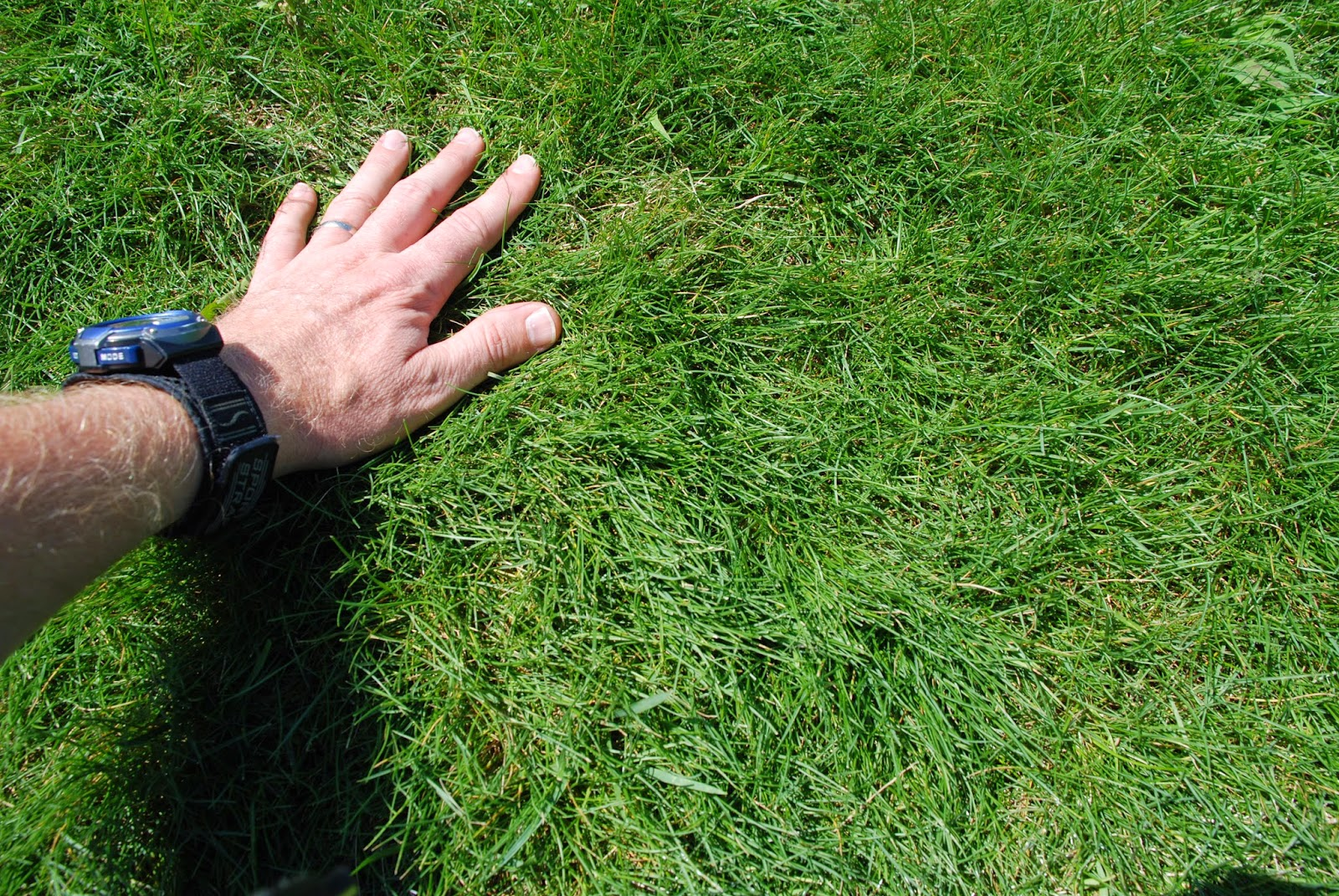 Purdue turf tips august 2014 for Tall red grass