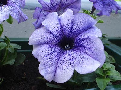 http://jomtanambunga.blogspot.com