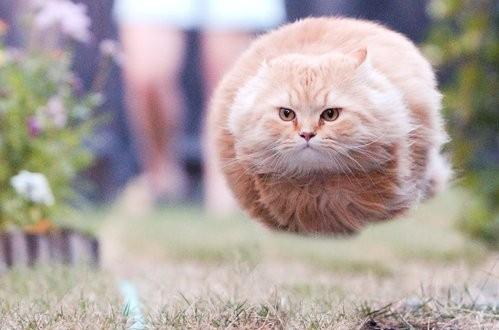funny-flying-cat