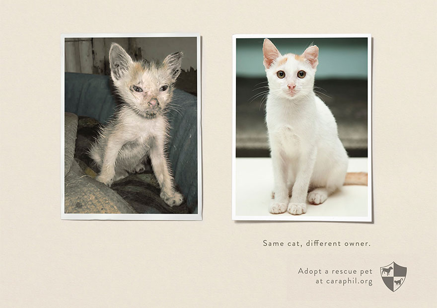 Same Pet, Different Owner. Adopt A Rescue Pet - Caraphil
