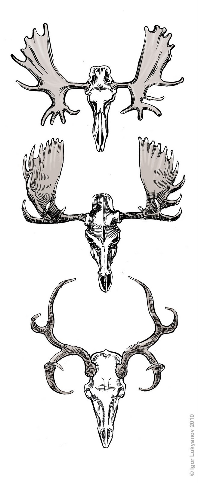 Moose skull drawing - photo#9