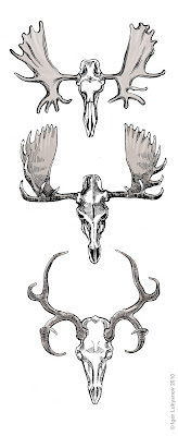 moose and deer skulls