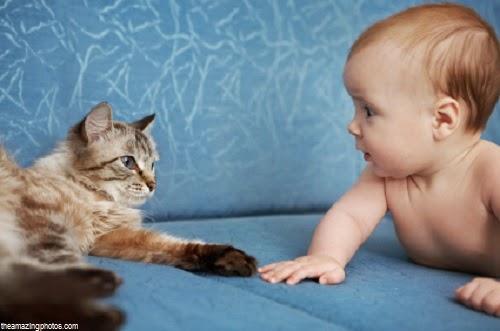 Image bébé mignon avec chat