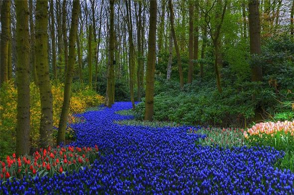 Most beautiful gardens all over the world for Most beautiful flower gardens in the world