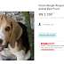 Cachorro Beagle resgatado do Royal é vendido no Mercado Livre
