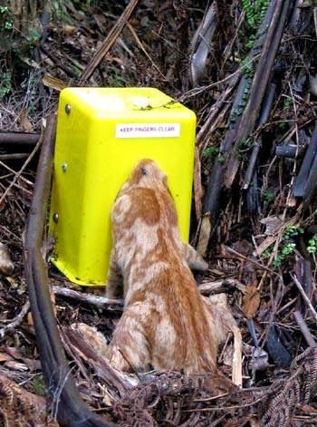 Humane Cat Trap Nz