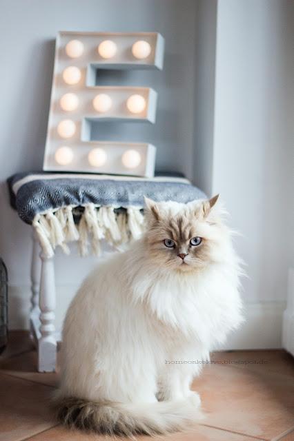 Leuchtbuchstabe von Hema, Britischkurzhaar Katze, Hocker Flohmarkt, Hocker umstreichen