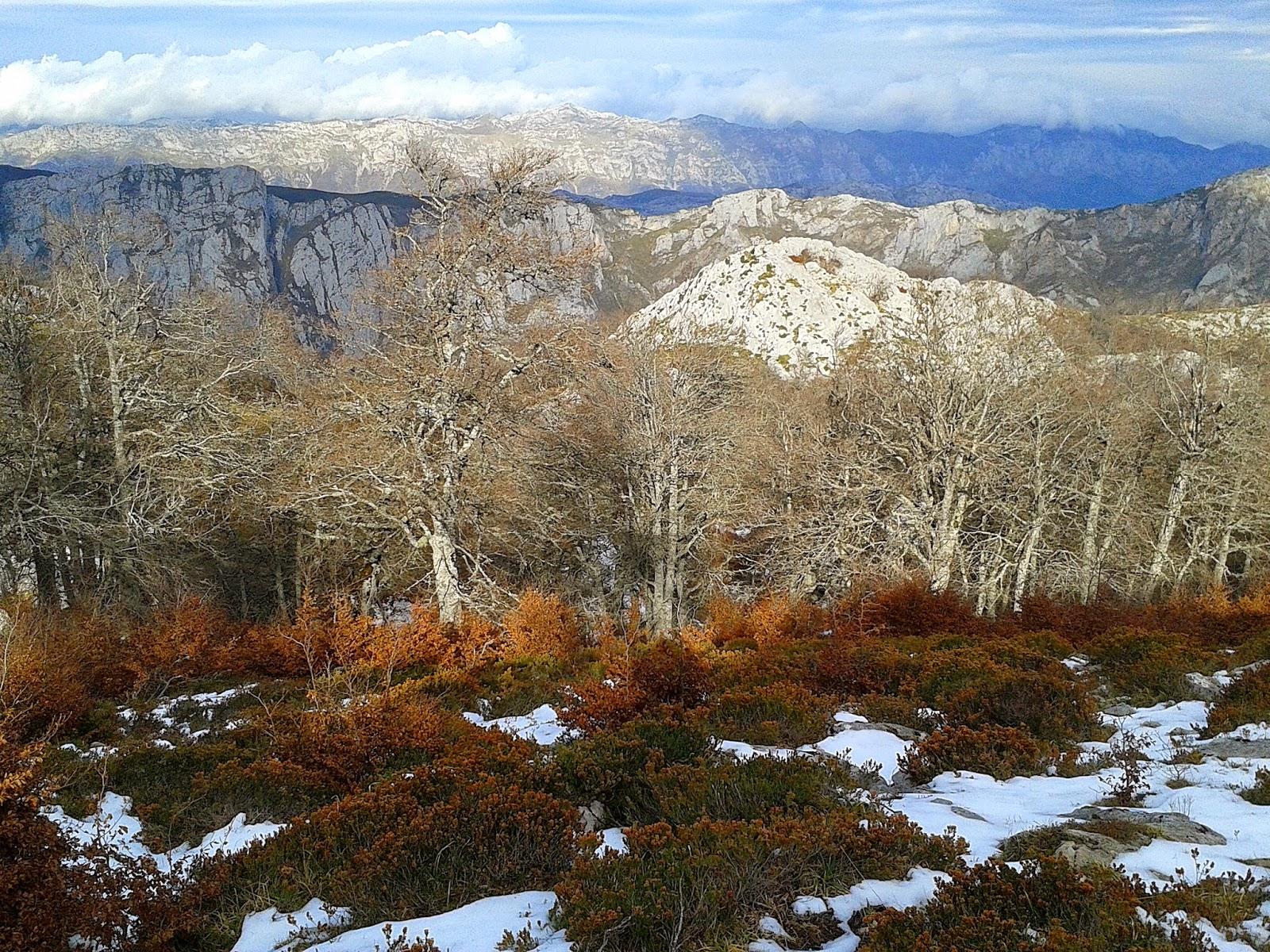 hayedo del Monte la Arandanera