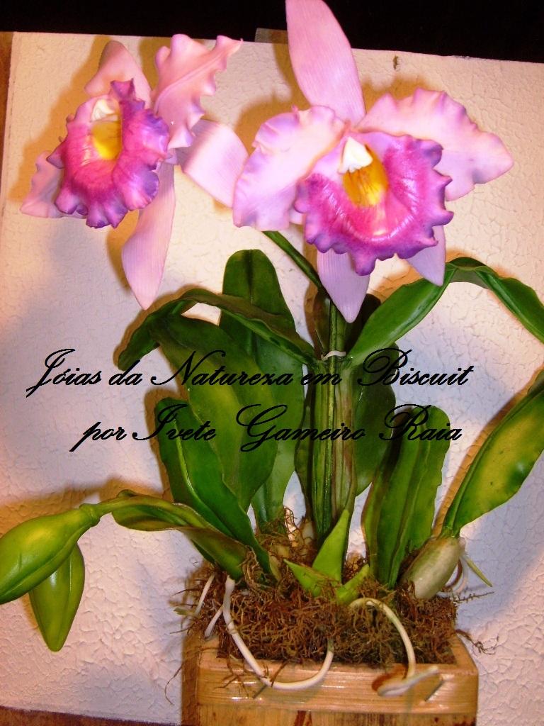 Aparador Ou Buffet Para Sala De Jantar ~ JOIAS DA NATUREZA EM BISCUIT I FEIRA INTERNACIONAL DEO ARTESANATO DESIGN LONDRINA PR 2012