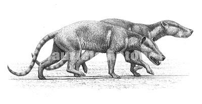 Mesonychidae Dissacus