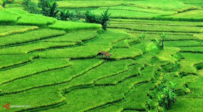 Pertanian Ri Akan Dibuat Melek It Klinik Pertanian Agam