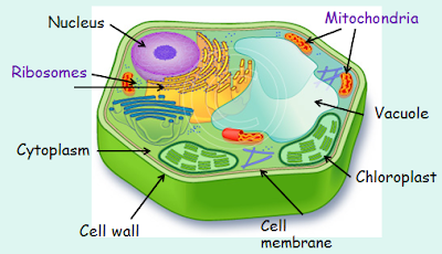 BIOLOGY NOTES FOR MATRIC STUDENTS: a cell