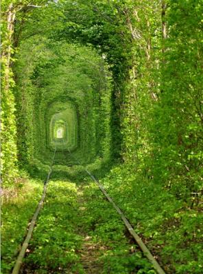 Затерянный мир зеленый туннель.