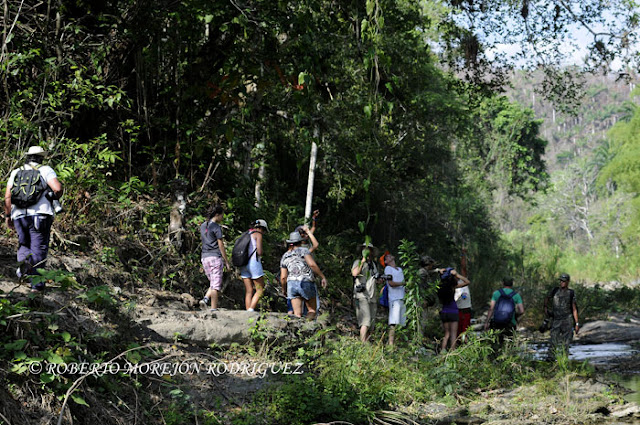 La foresta cubana los recibe mostrando sus bellezas