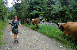 Our companions back to Col de Turini