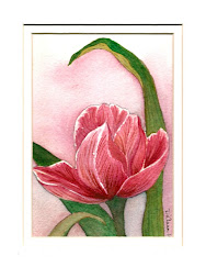 Another Pink Tulip