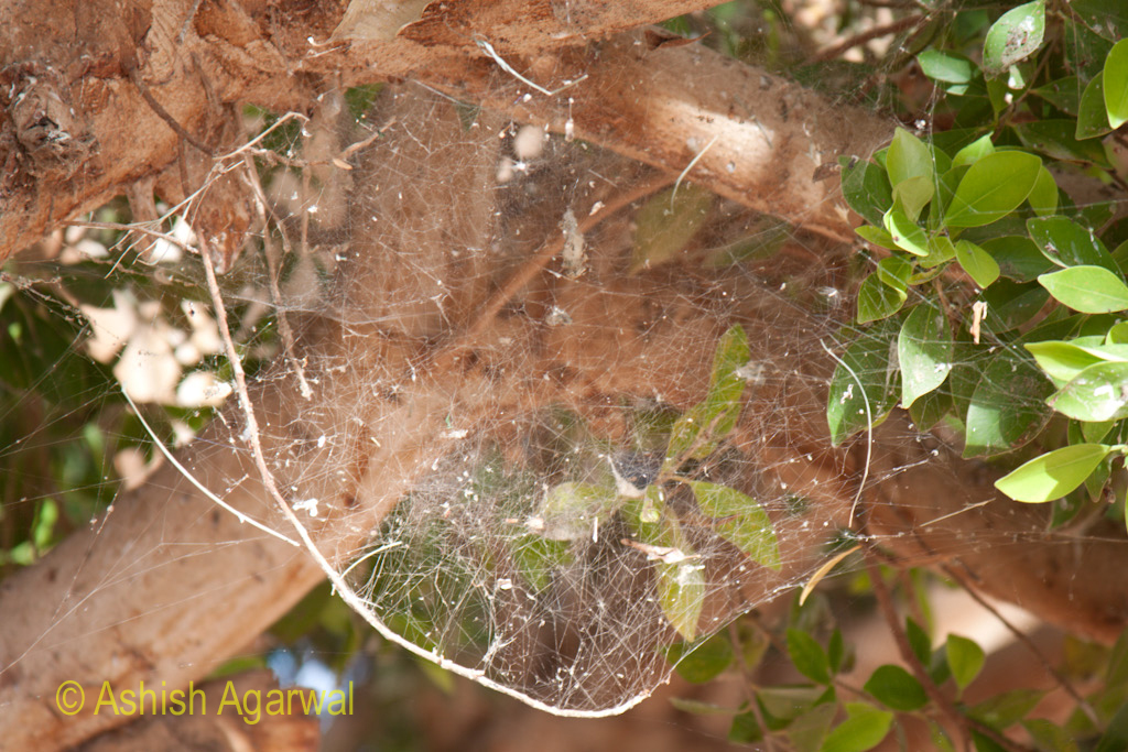 A spiderweb near the temple of Abu Simbel in South Egypt