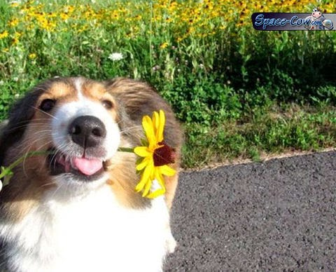 funny flower dog picture
