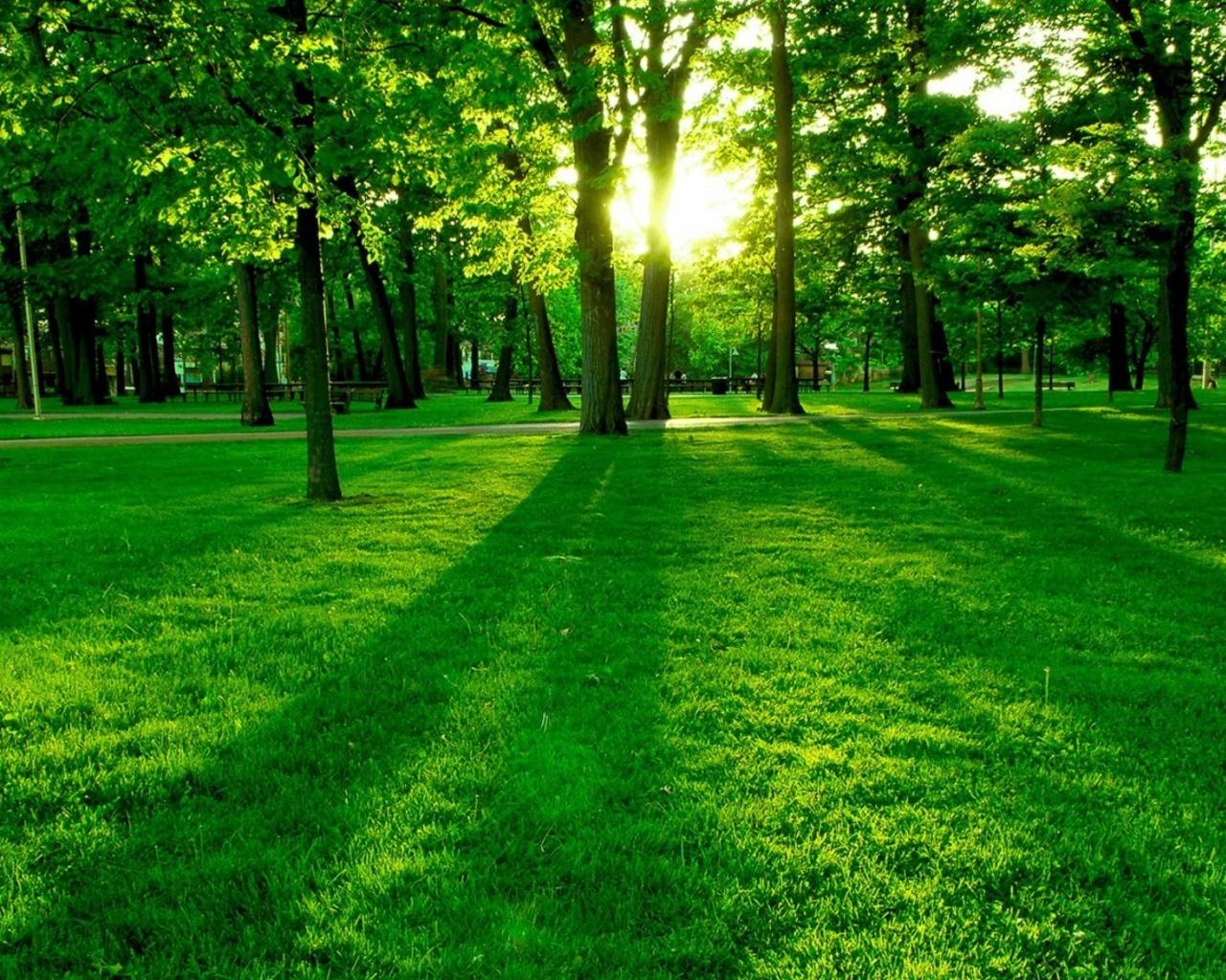 http://4.bp.blogspot.com/-YnntNKij_YI/T77IP0KE7PI/AAAAAAAAE18/caFRXk90sOk/s1600/Green-Forest-Wallpaper-green-20036604-1280-1024.jpg