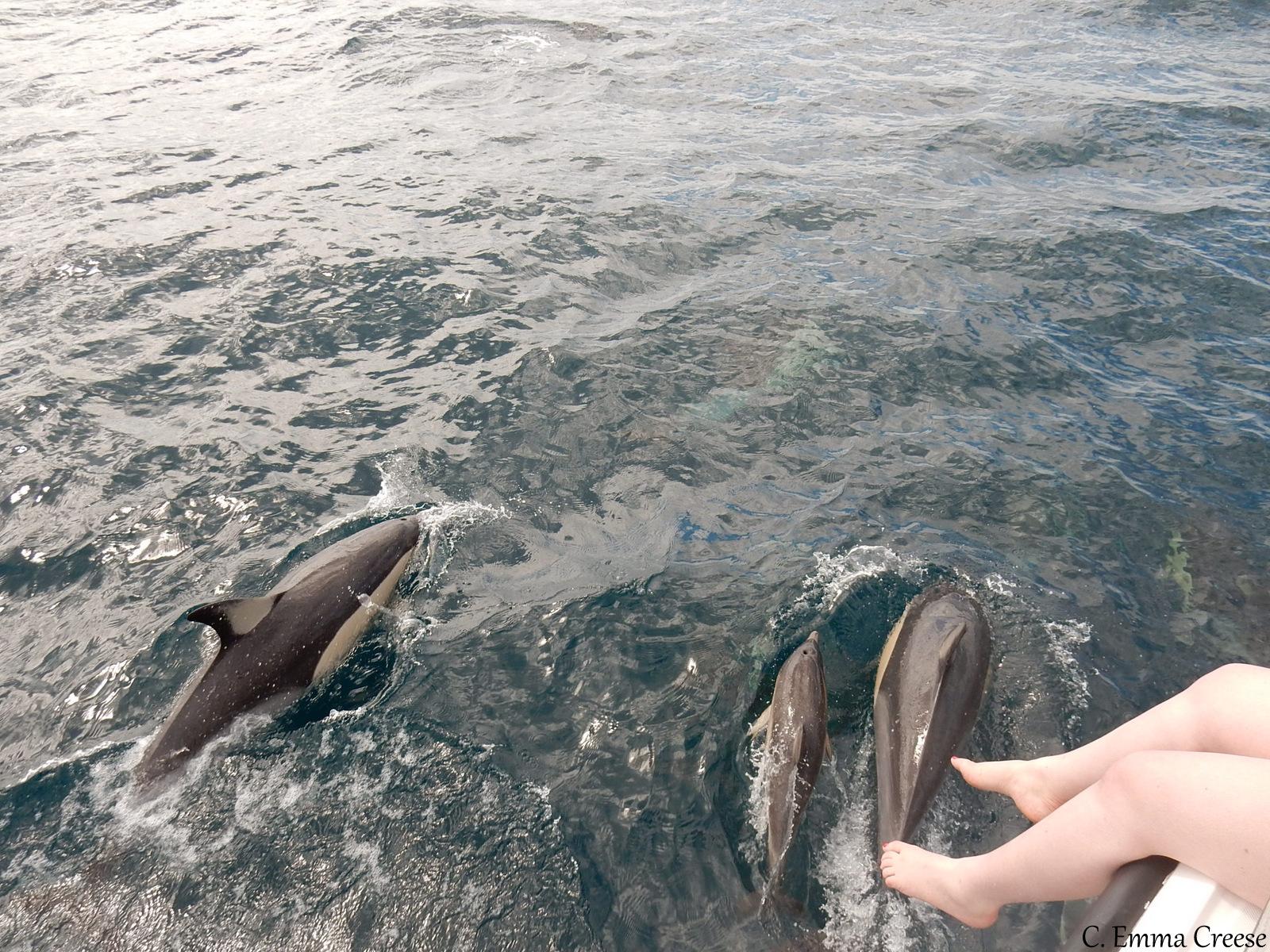 Wild dolphins in Tauranga New Zealand – Love Travel Linkup