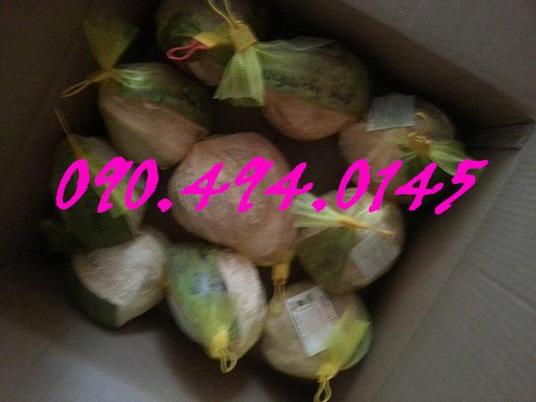dừa sáp giá rẻ