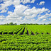 Investeren in bodem en water loont voor agrariër