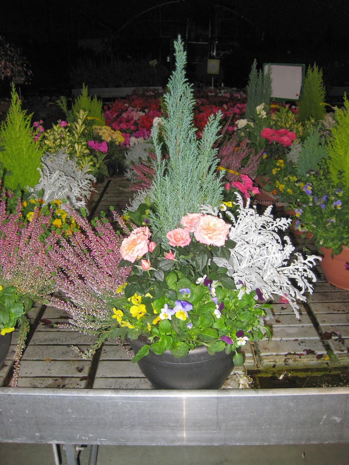 Hascarzaha askartza centro de jardiner a mandragora for Centro de jardineria