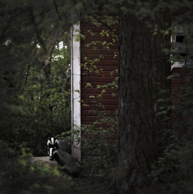 Wild animals in abandoned house (20 pics), wild animal photos, Kai Fagerström photography, amazing animal pictures